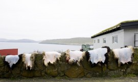 Sheepskins hanging to dry after slaughtering